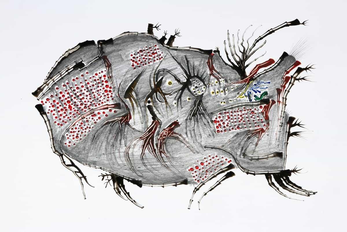 Peshku ll, Albulen Neziri
